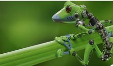 Conoce a los xenobots: los primeros robots vivos creados a partir de células madre de rana