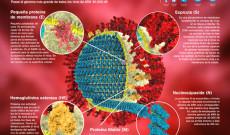 El coronavirus ha dejando 3 muertos en China y se ha expandido a ciertos países de Asia