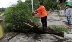 Debido a la racha de viento que azotaron en el municipio PC realizó trabajos de apoyo.